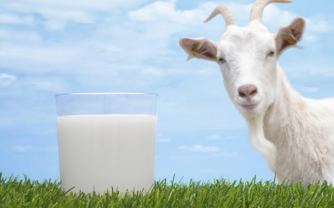 laptele de capra 1