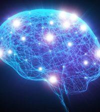 creier neuroni